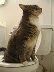 Mèo trên toilet. Nguồn: OntheNet