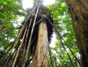Nhà sàn của cha côn ho Hồ trong khu rừng ở Quảng Ngãi. Nguồn: VNEXPRESS.