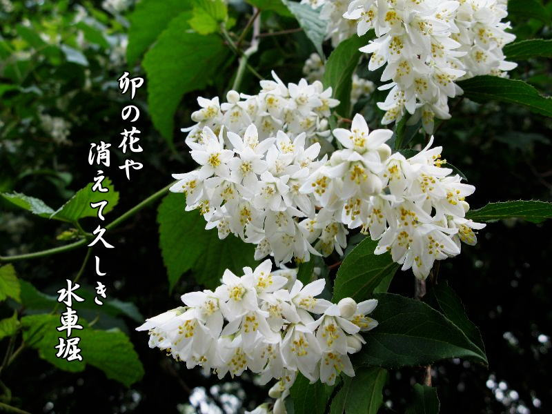 Hoa Unohana. Nguồn: http://ankodaira.exblog.jp/16012079/