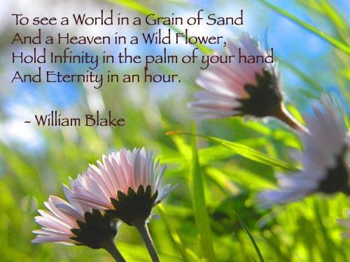 blake-to-see-a-world-flower-phoolanjaya