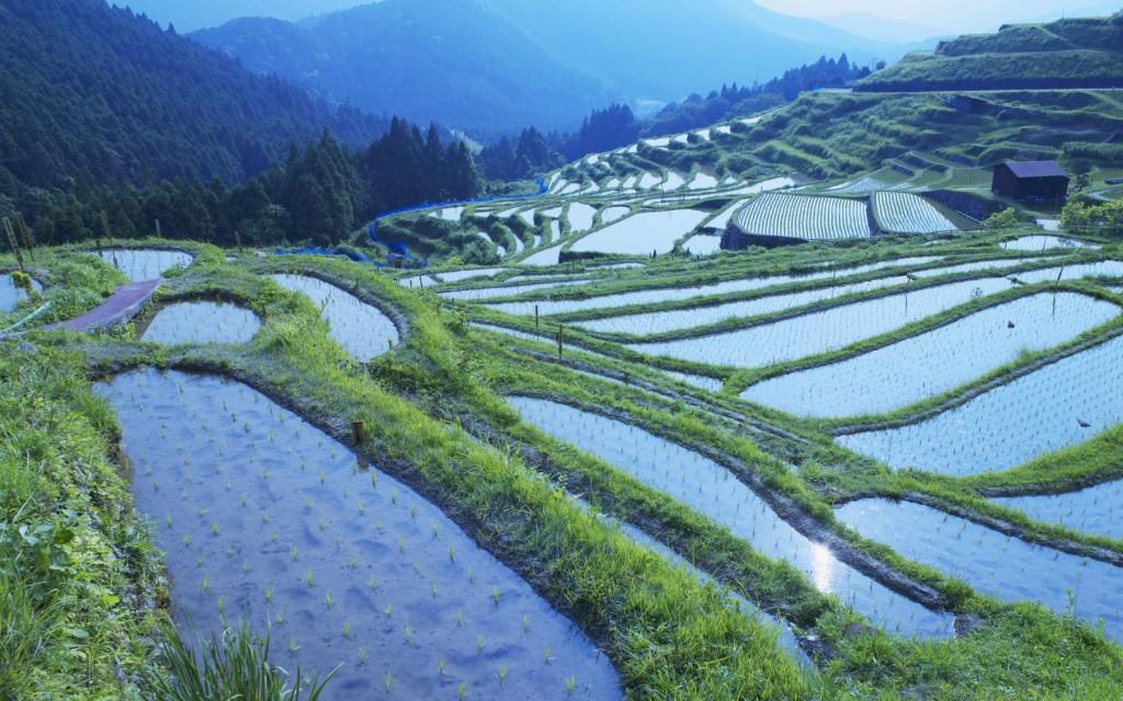 Ruộng lúa ở quận Mie, Nhật Bản. Nguồn: mi9.com