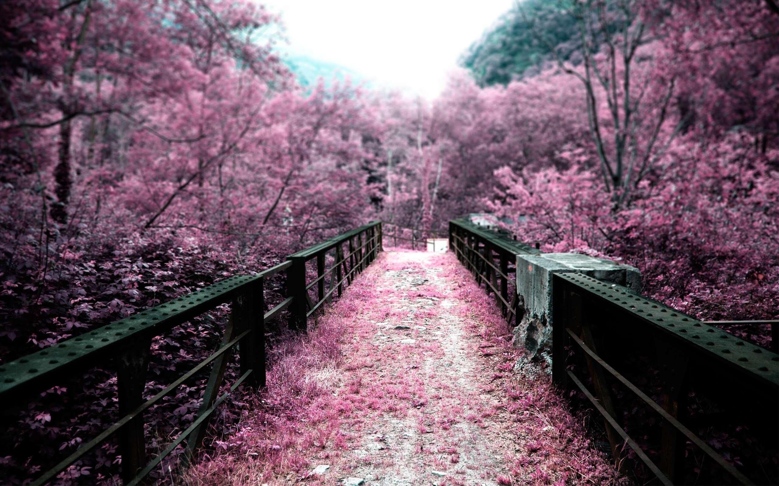 Sakura. Nguồn: ieeet.com