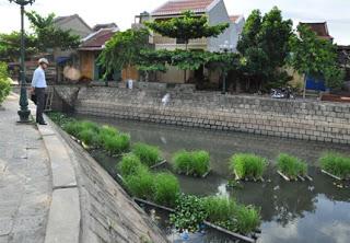 Mặc dù chính quyền địa phương đã cải tạo hồ điều hòa phía thượng lưu kênh Chùa Cầu, nhưng tình trạng ô nhiễm tại đây cũng không được cải thiện là mấy