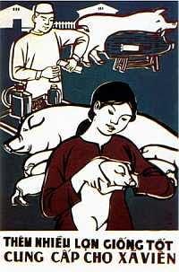 Lợn giống. Nguồn: pigtrop.cirad.fr/Trong An 1978