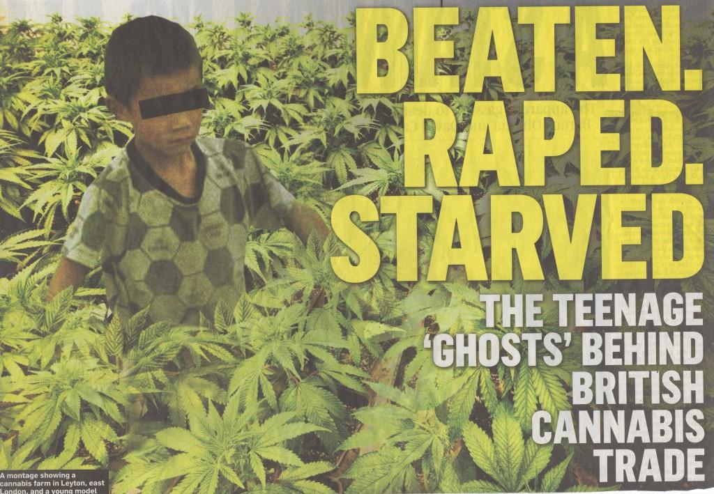 Resultado de imagen de cannabis farms in scotland