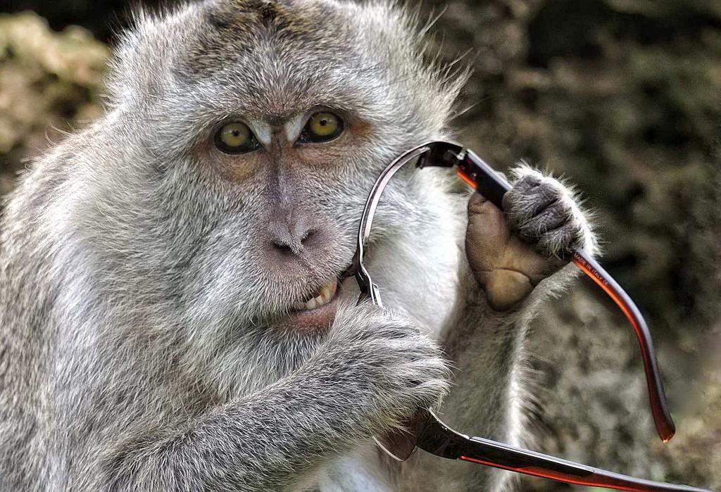 Ngu xuẩn thật, dùng cái nầy che mắt cho mờ đi, không thấy gì rõ cả. Nguồn: Flickr | Clearvisions