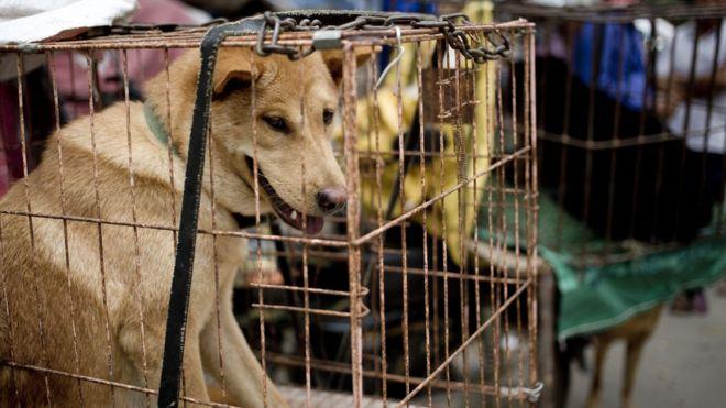Chó trong lồng ở chợ. Nguồn:  AP