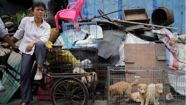 Chó chờ được cứu (hay) bị làm thịt? Nguồn: EPA