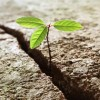 plant-hope-growth-in-rocks-survivor