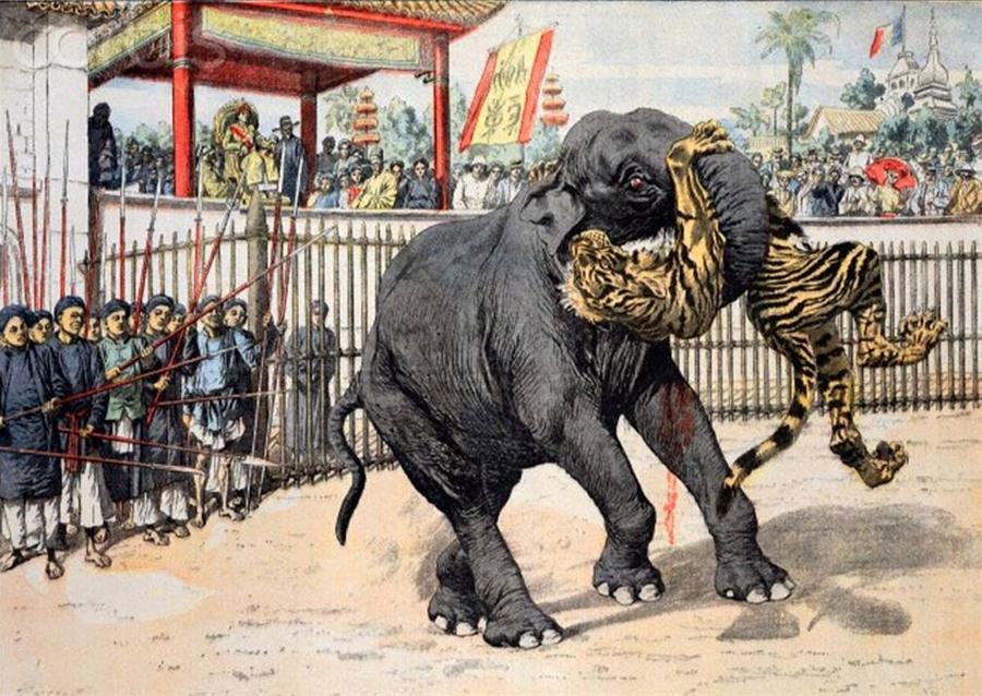 Vua Thành Thái ngự xem trận đấu voi và hổ. Ảnh: Flickr.com